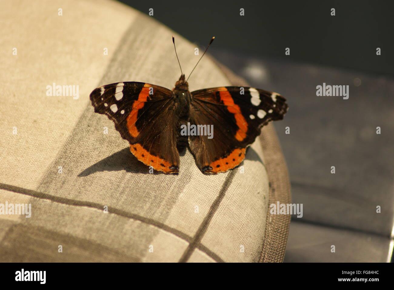 Butterfly Chair Stockfotos & Butterfly Chair Bilder - Alamy