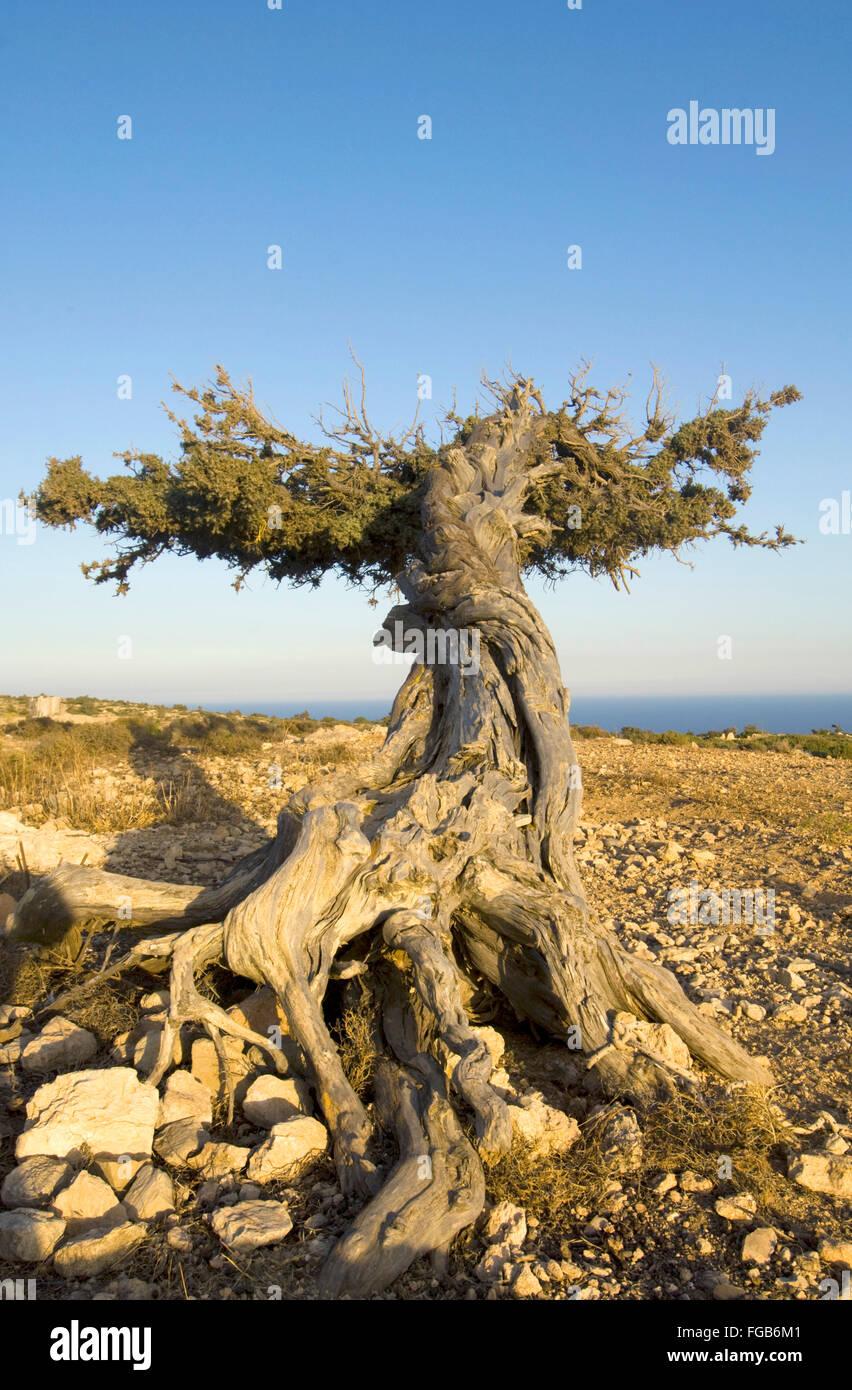 Griechenland, Kreta, Insel Gavdos, Landschaft Und Vegetation Stockbild