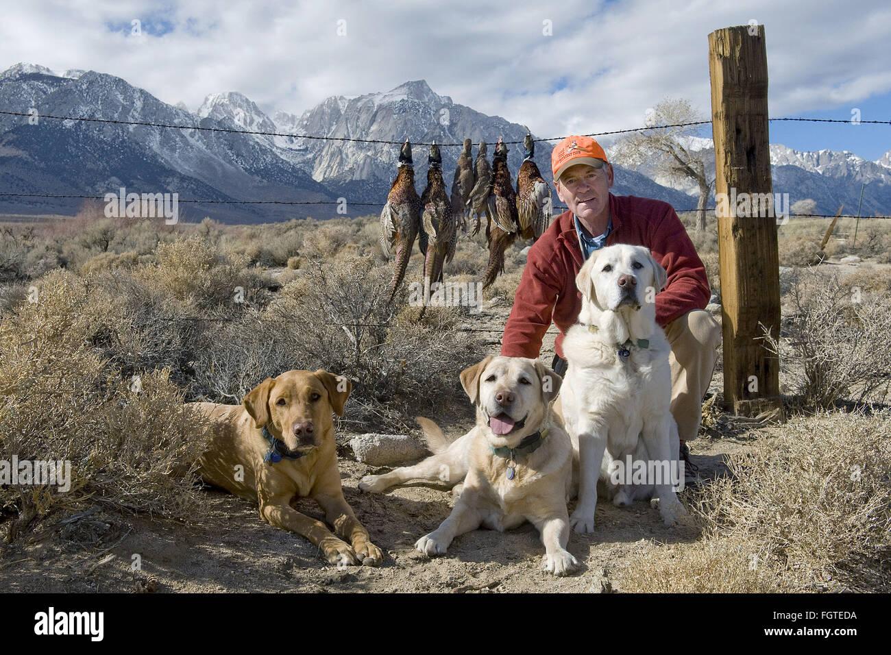 Fox Red Labrador Retriever Stockfotos & Fox Red Labrador Retriever ...
