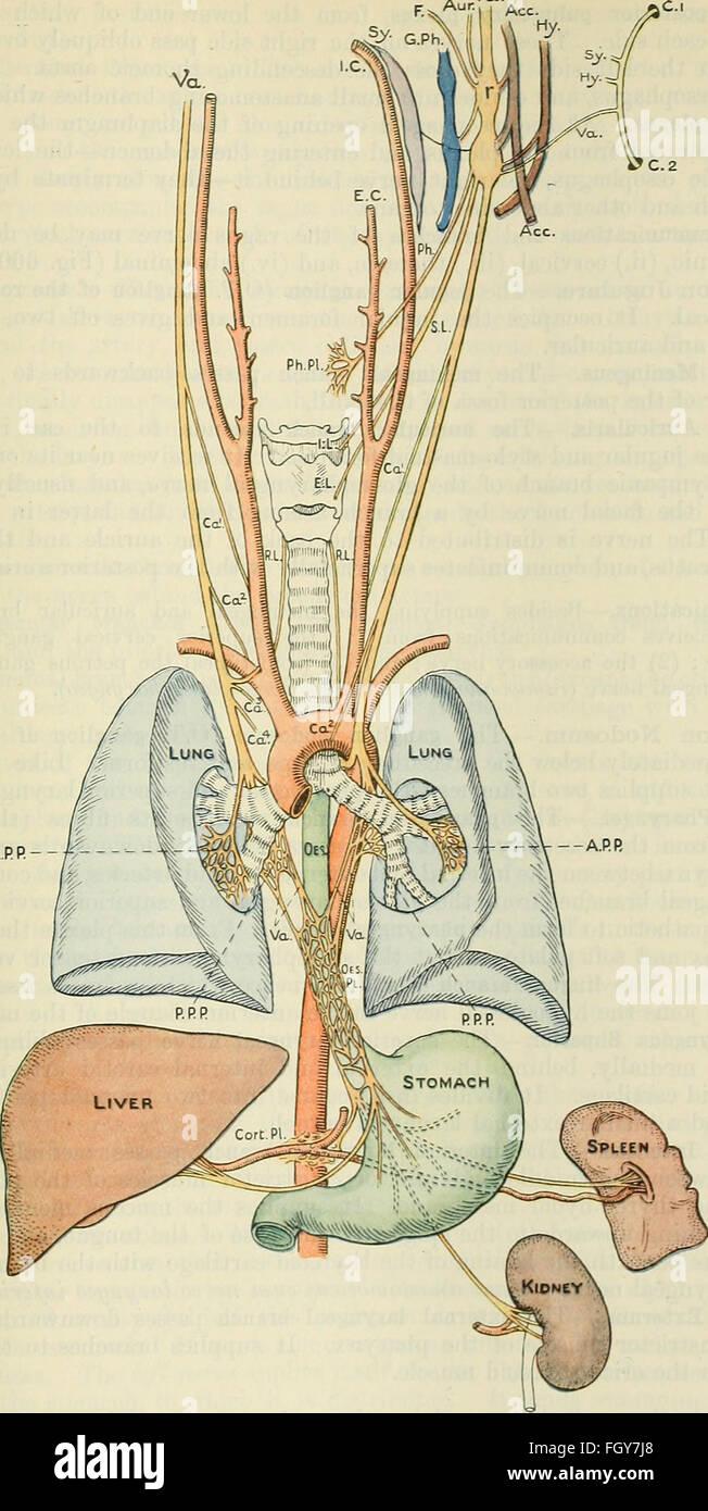 Old Anatomy Book Stockfotos & Old Anatomy Book Bilder - Alamy