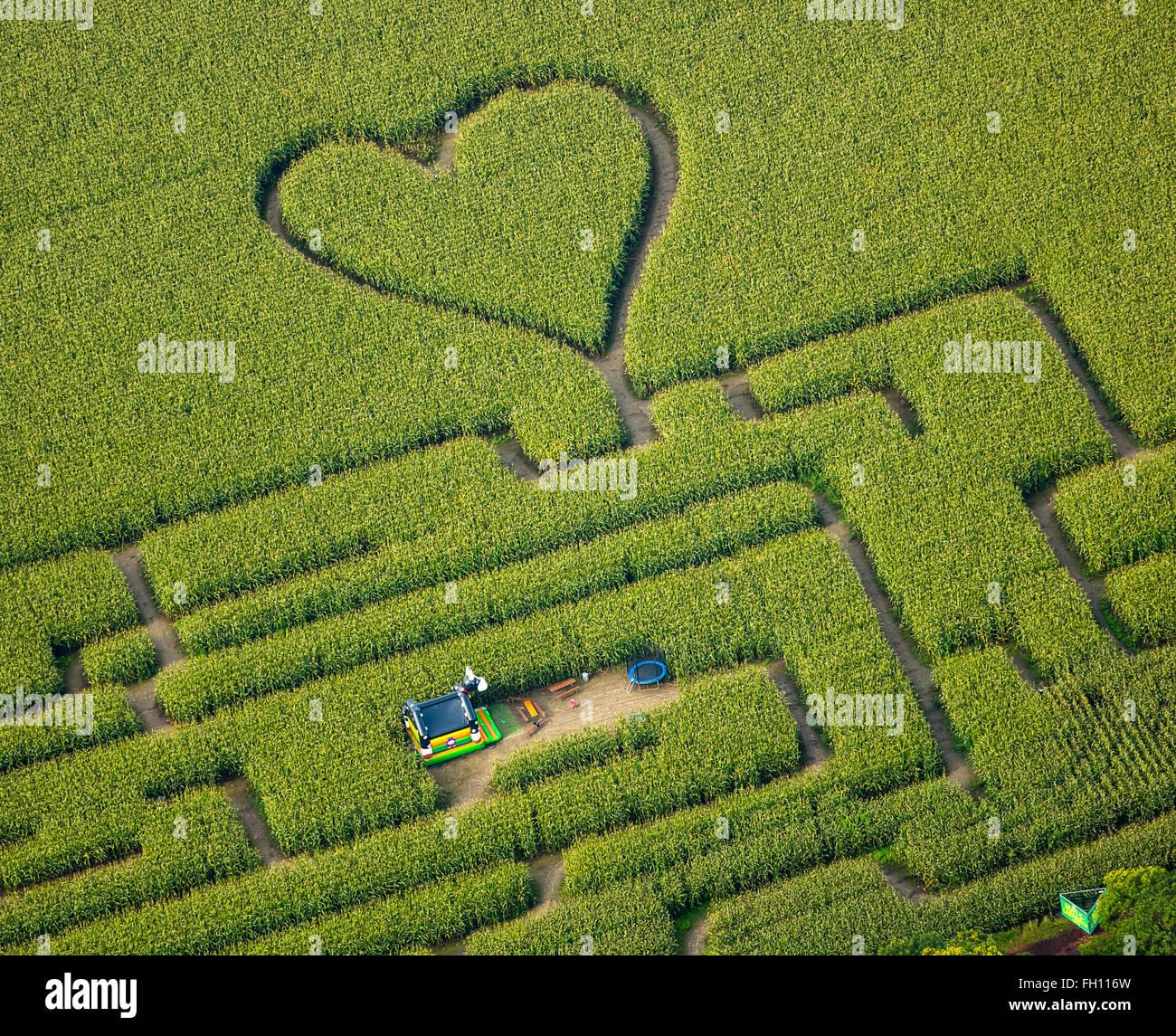 Labyrinth mit Herz im Maisfeld, Maislabyrinth, grünes Herz, Herzform, Herz geformt, Herten, Ruhrgebiet Stockfoto