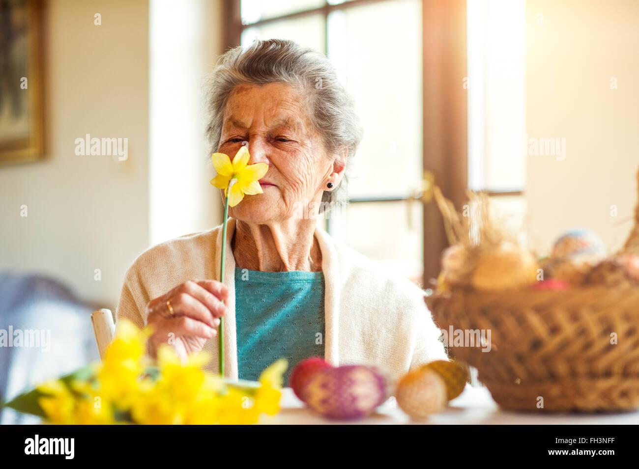 Ältere Frau durch die Fenster riechen gelbe Narzisse, Ostern Stockbild
