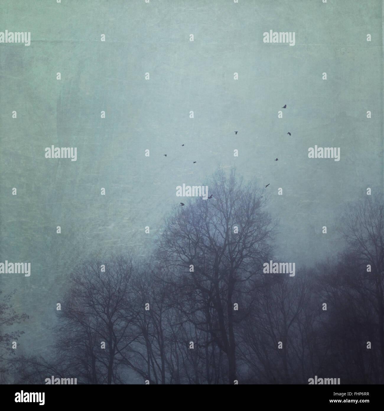 Silhouetten der Bäume im Nebel mit fliegenden Vögel, Struktureffekt Stockbild