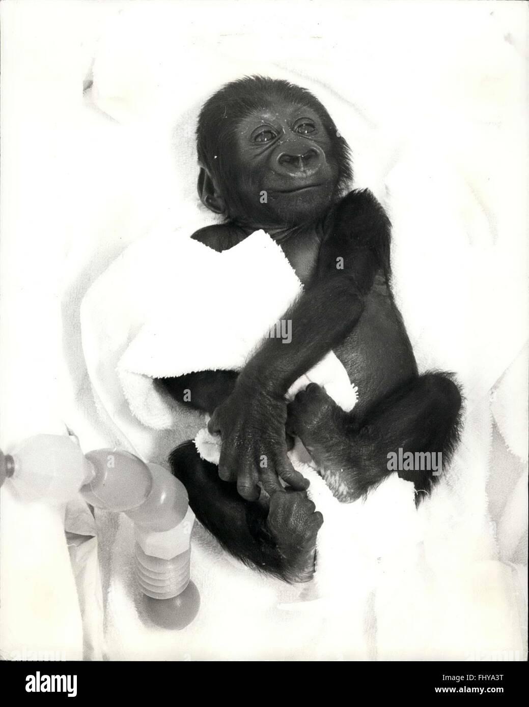 Gemütlich Gorilla Muskelanatomie Ideen - Anatomie Ideen - finotti.info