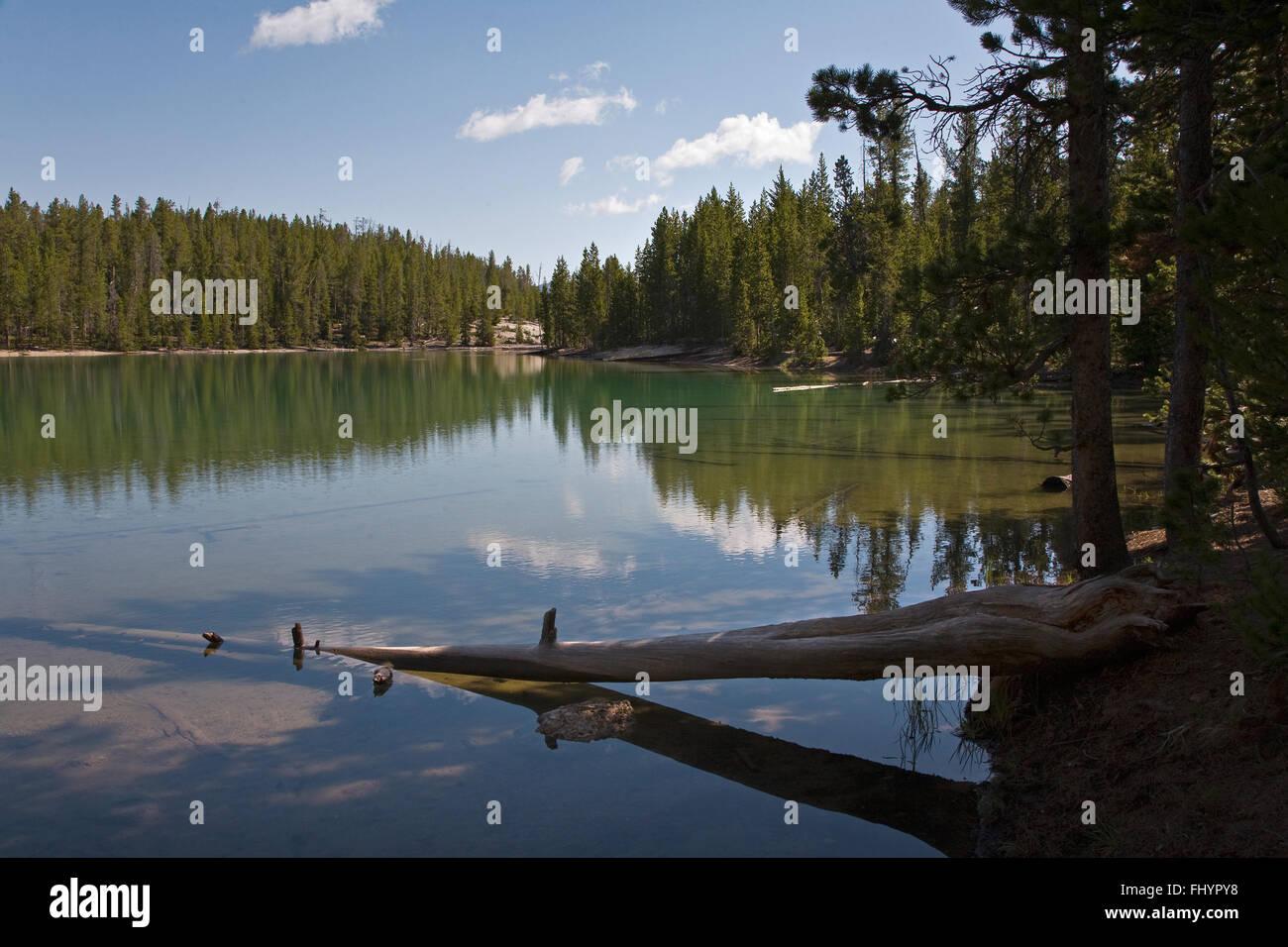 Eine LODGE POLE Kiefer Wald spiegelt sich in einem kleinen See - YELLOWSTONE-Nationalpark, WYOMING Stockfoto