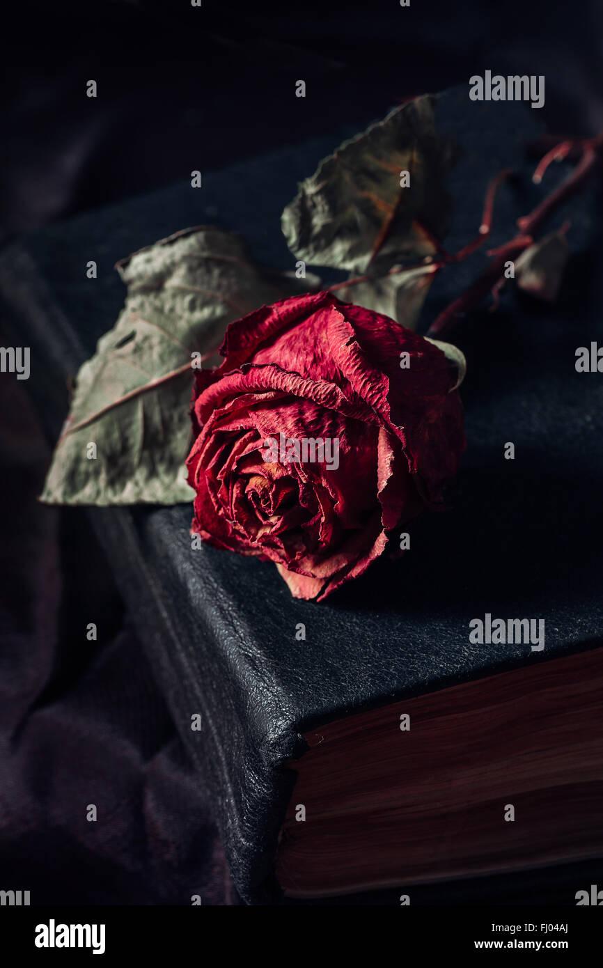 Eine trockene rose Stockfoto