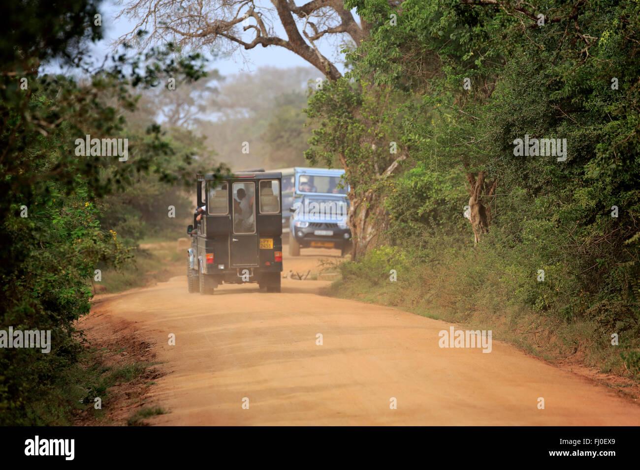 Safari-Fahrzeug, Pirschfahrt mit Touristen in Yala Nationalpark Yala Nationalpark, Sri Lanka, Asien Stockbild