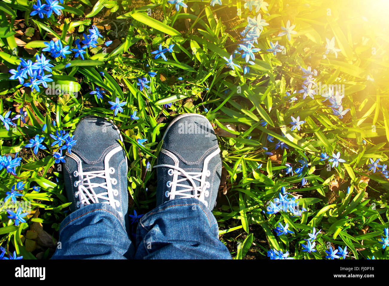 Füße stehen auf Scilla Blumen im park Stockbild