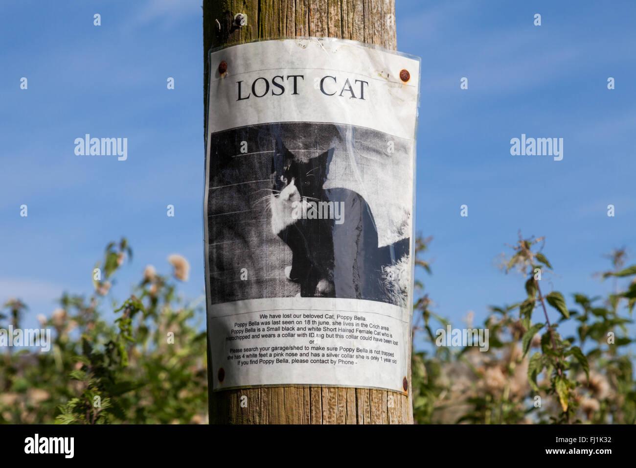 Eine verlorene Katze Plakat an einen Telegrafenmast im Vereinigten Königreich Stockbild