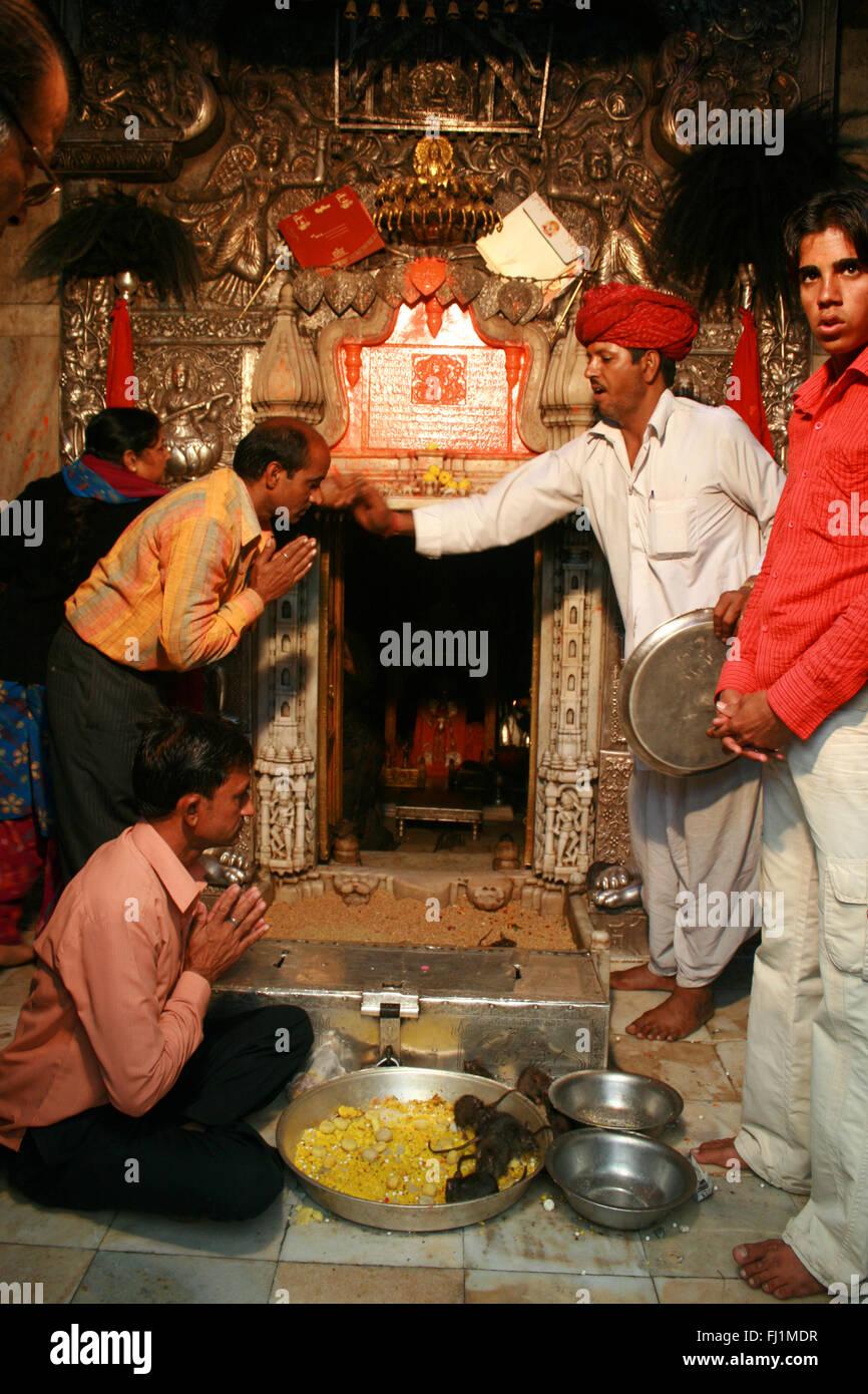 Die Menschen beten im inneren Heiligtum von Karni Mata Tempel (Ratten Tempel), Bikaner, Rajasthan, Inde Stockbild