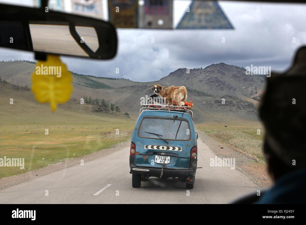 Hund transportiert auf ein Auto in die Mongolei Stockbild