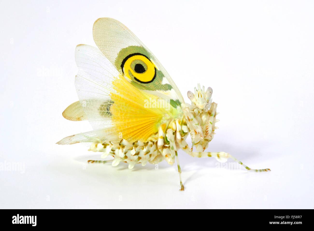 Mantis api
