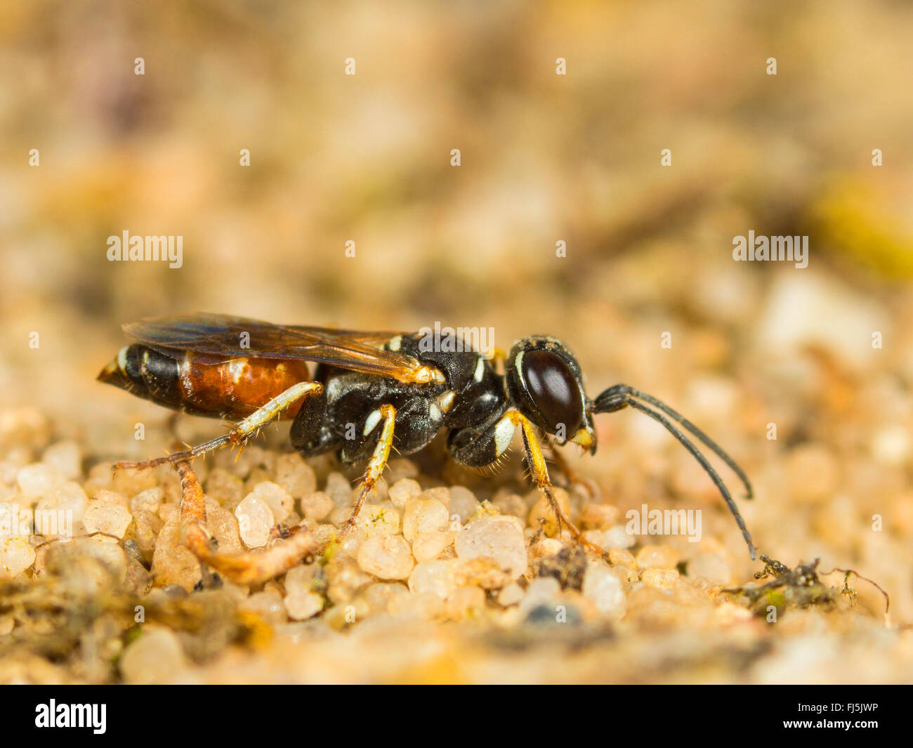 wasp nest with wasp stockfotos wasp nest with wasp bilder alamy. Black Bedroom Furniture Sets. Home Design Ideas