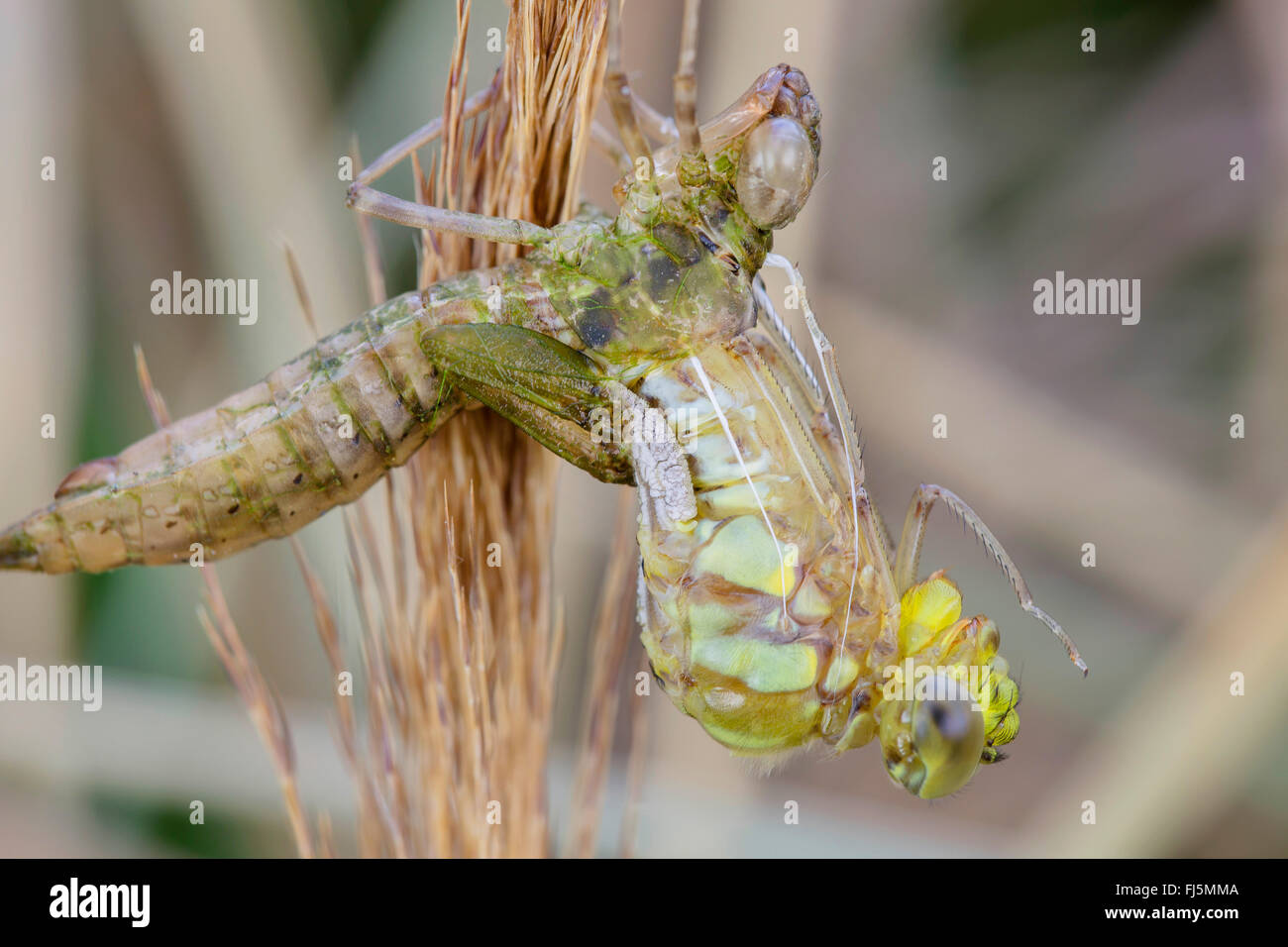 Wunderbar Insekt Anatomie Diagramm Bilder - Anatomie Von ...