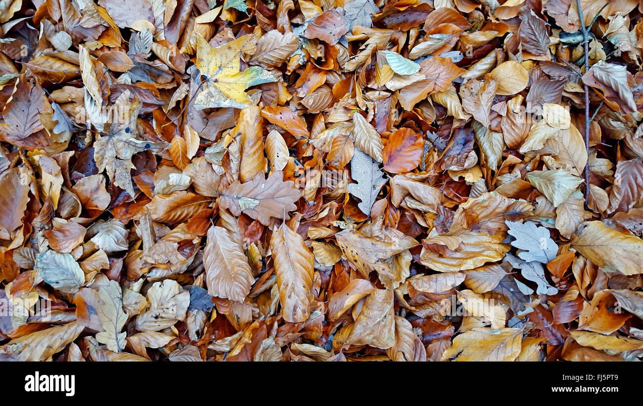 Autumnal coloring stockfotos autumnal coloring bilder for Boden deutschland