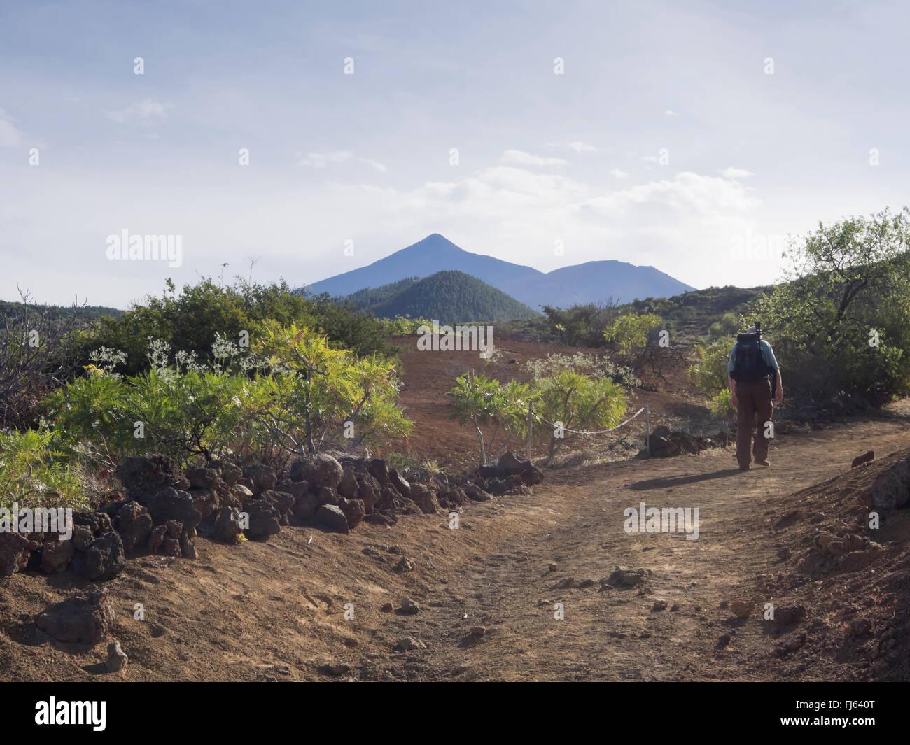 Wanderer zu Fuß bergauf von Santiago del Teide auf Teneriffa, ein Wanderweg durch die vulkanische Landschaft, Stockbild