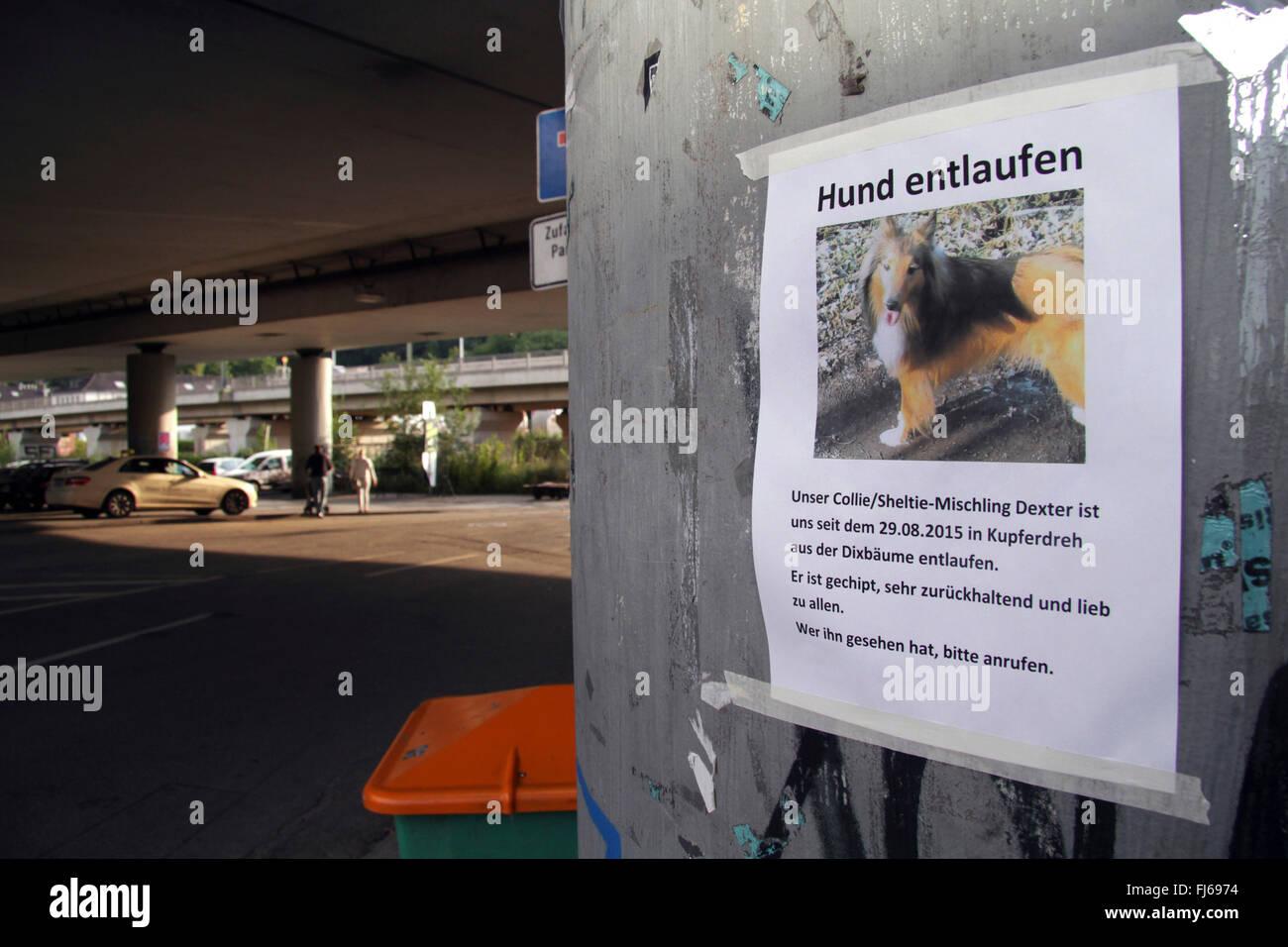 Suche Poster, Suche nach verlorenen Hund, Deutschland Stockbild
