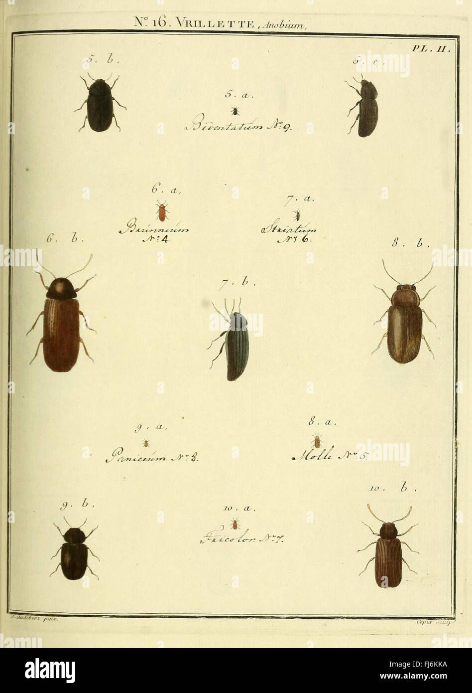 Entomologie, Ou, Histoire Naturelle des Insectes (Nr. 16 Vrillette PL II) Stockbild