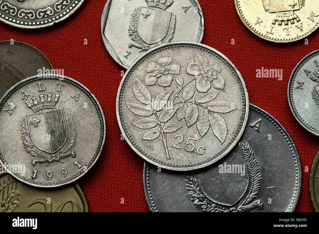 Münzen Aus Malta Immergrüne Rose Rosa Sempervirens In Der