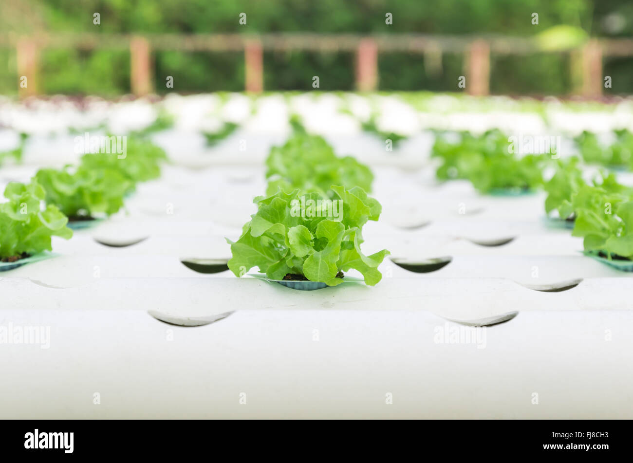 hydroponic vegetable production Early development of hydroponic and seawater greenhouse processes would ideally be restricted to areas which demonstrate stable economics, heightened land degradation, a high density of species, and a human need for non-traditional, self-sustaining means of fresh water or food production.