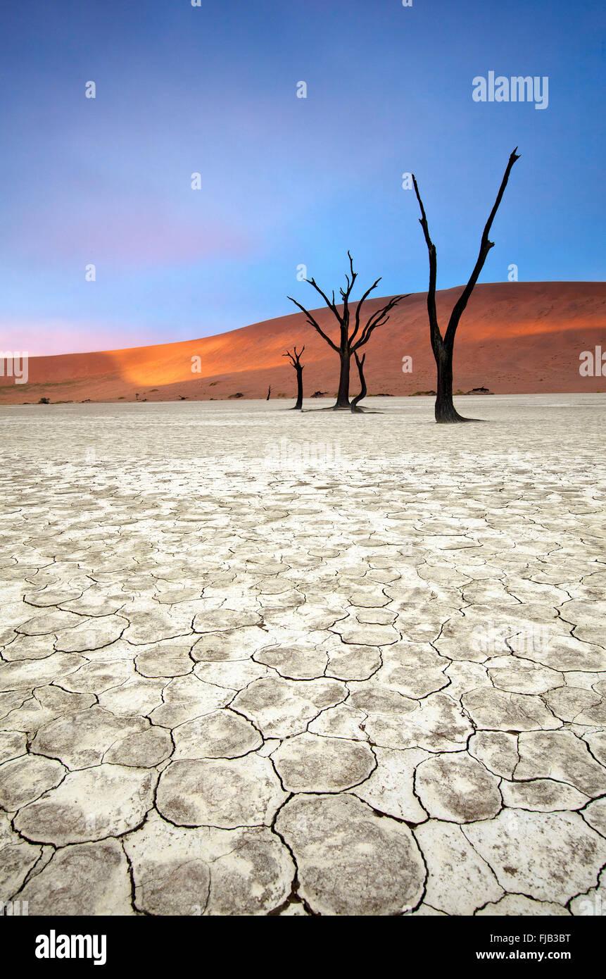 Deadvlei Landschaft Stockbild