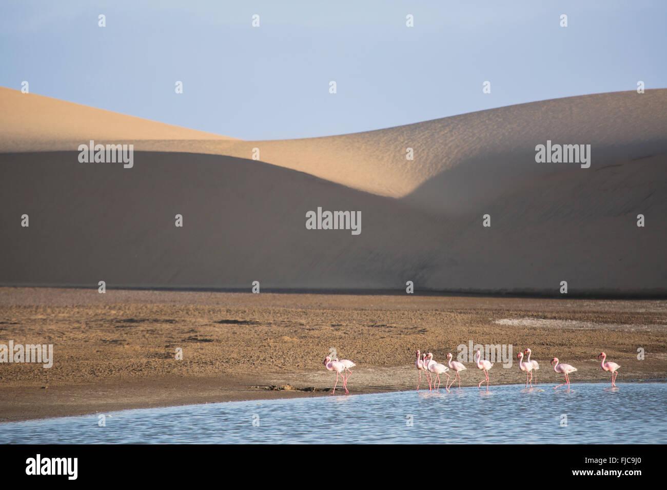 Flamingos in der Walfischbucht Feuchtgebiet Stockbild