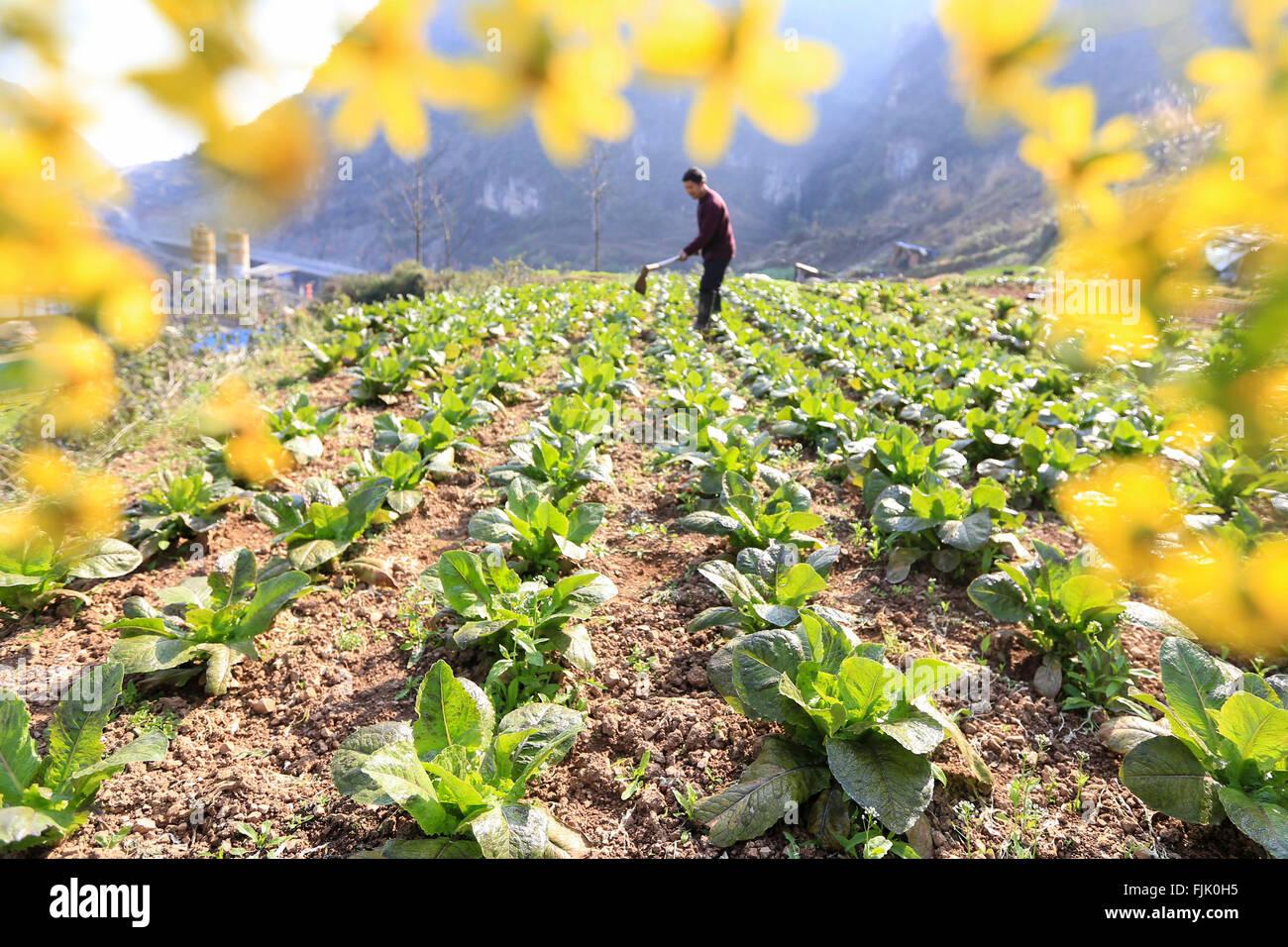 Qiandongnan. 1. März 2016. Ein Bauer arbeitet in den Bereichen am Yuangu Township im Südwesten Chinas Stockbild