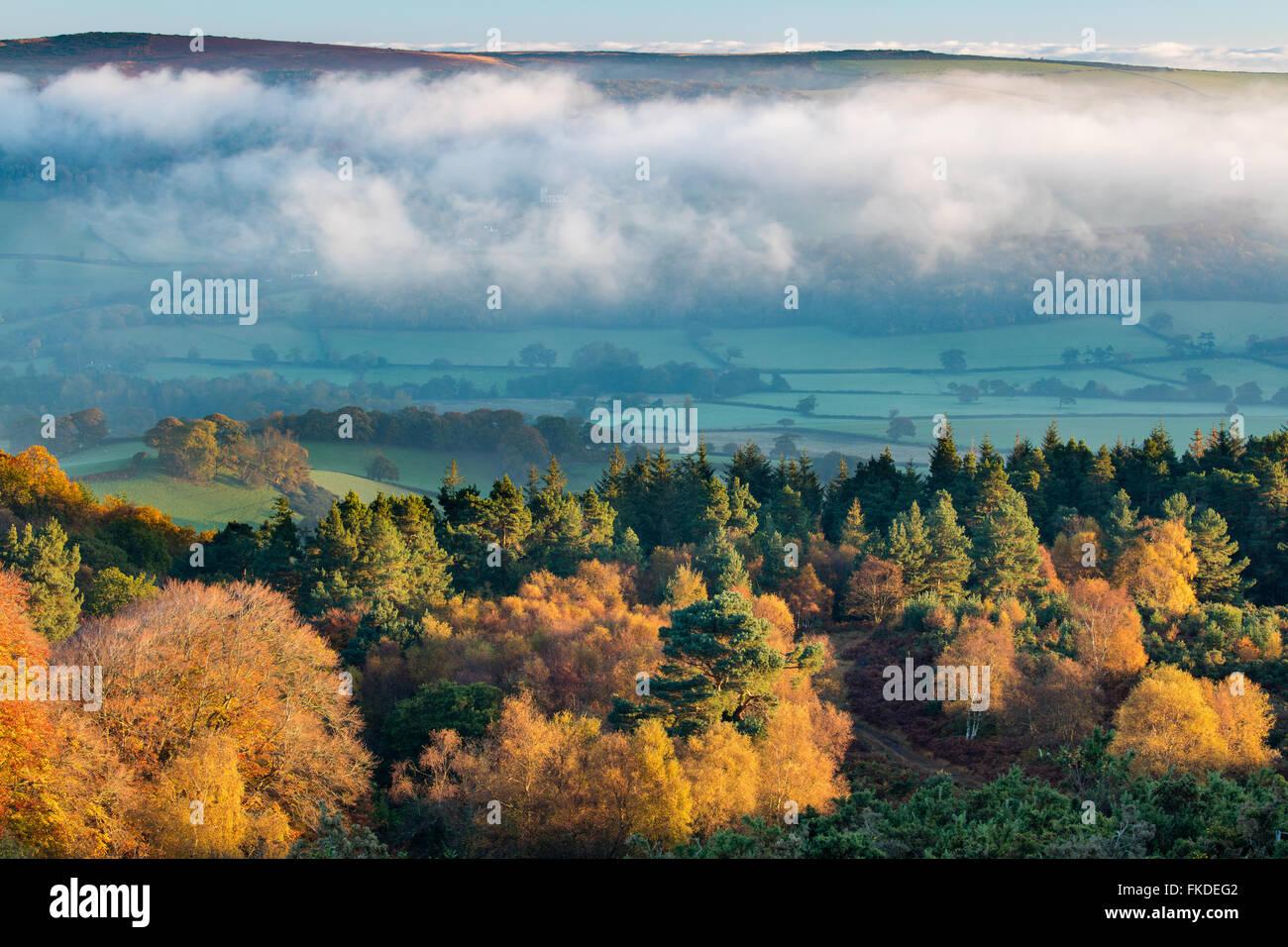 Herbstfärbung nr Webbers Post mit Nebel hängt über den Holnicote Estate, Exmoor National Park, Somerset, Stockbild