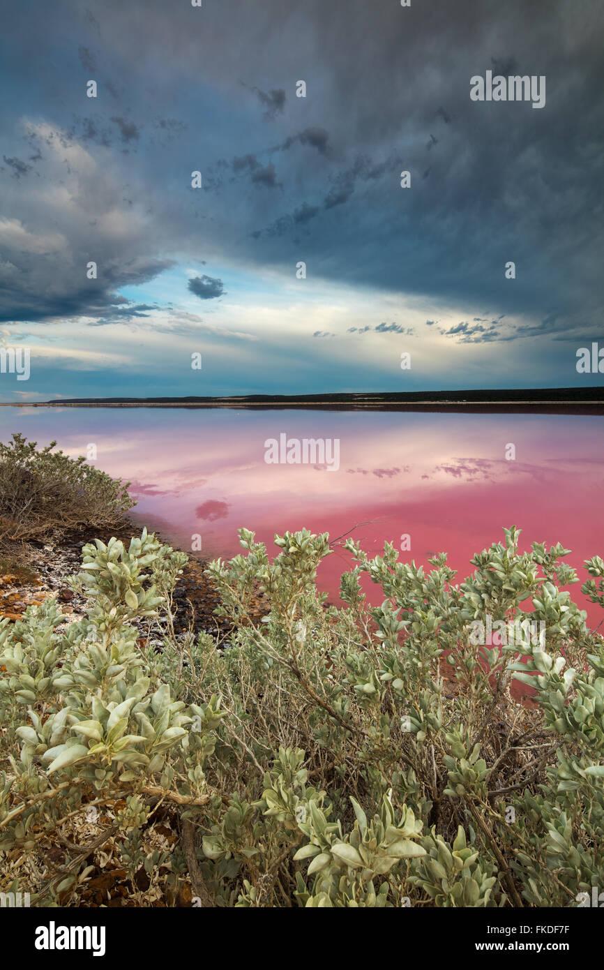 der Rosa Lagune am Port Gregory, West-Australien Stockbild