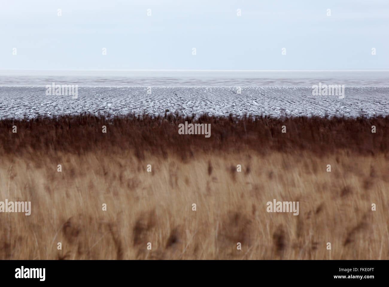 Röhrichten und Wattenmeer am Steart Marshes. Somerset. VEREINIGTES KÖNIGREICH. Stockbild