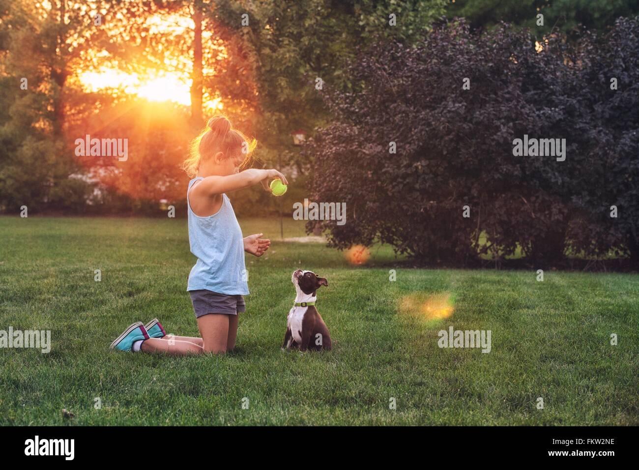 Seitenansicht der Mädchen kniend auf dem Rasen mit Tennisball zu Boston Terrier Welpen Lehren Stockbild
