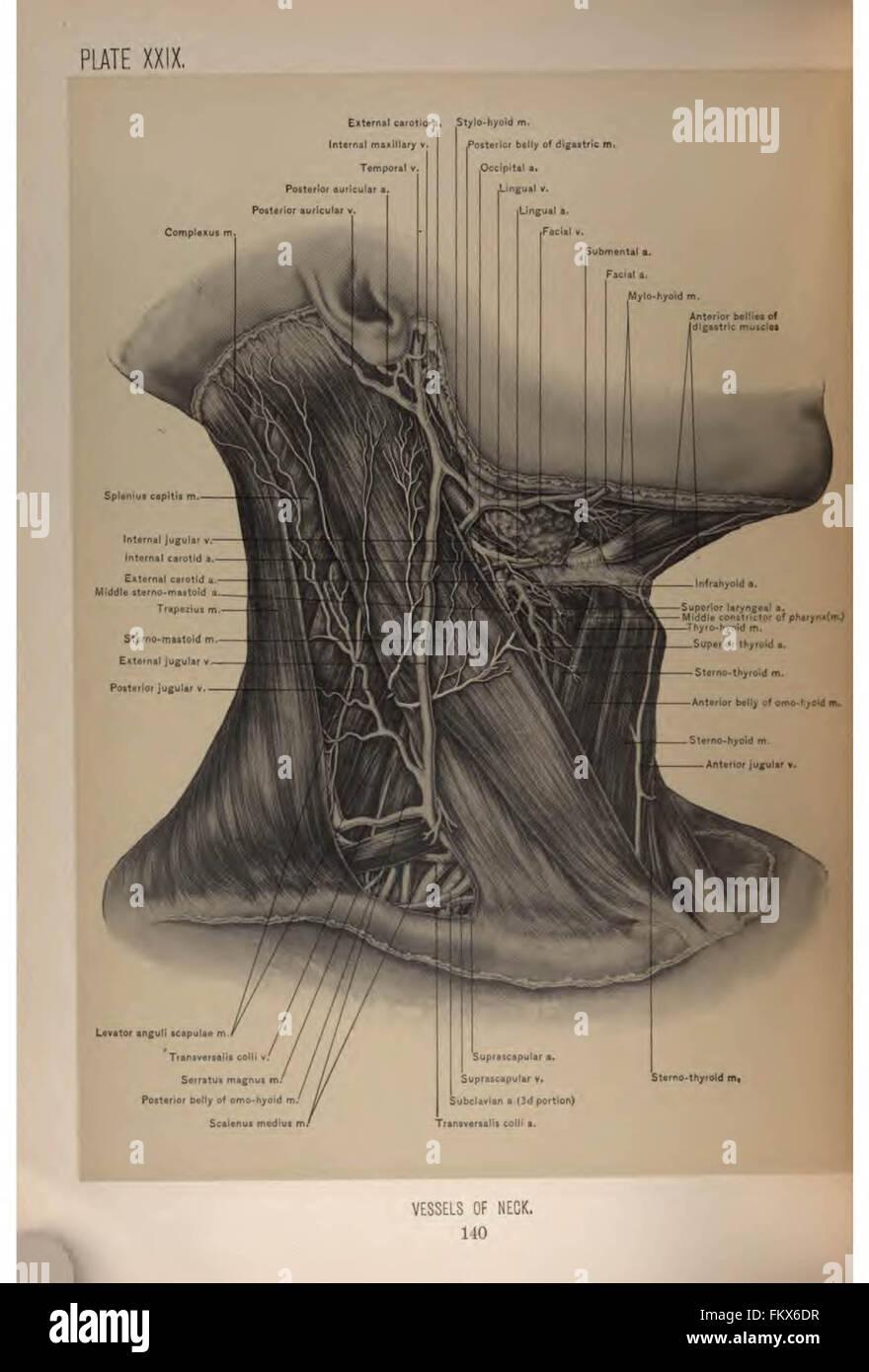 Chirurgische Anatomie von Kopf und Hals von Deaver, John B. (John ...