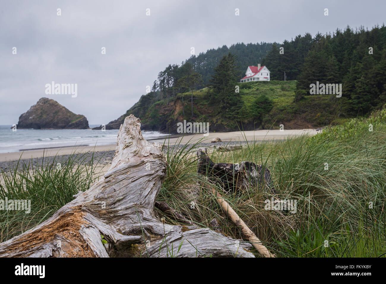 Ein großes Stück Treibholz unter Küsten Gräser macht einen perfekten Vordergrund des Teufels Stockbild