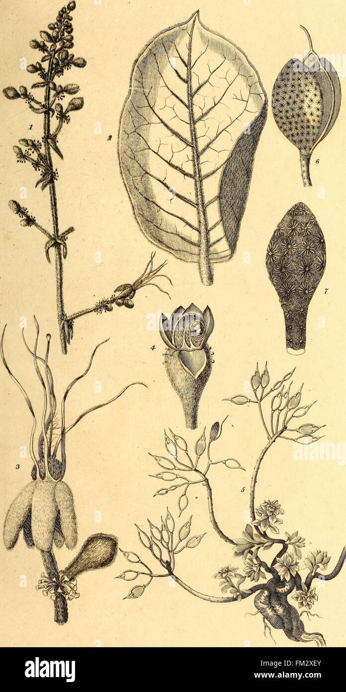 Elemente der Philosophie des Pflanzen - mit den Grundsätzen der ...