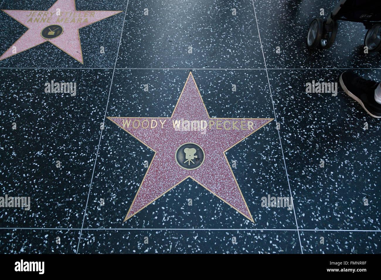 HOLLYWOOD, Kalifornien - 8. Februar 2015: Woody Woodpecker Hollywood Walk of Fame Stern am 8. Februar 2015 in Hollywood, Stockbild