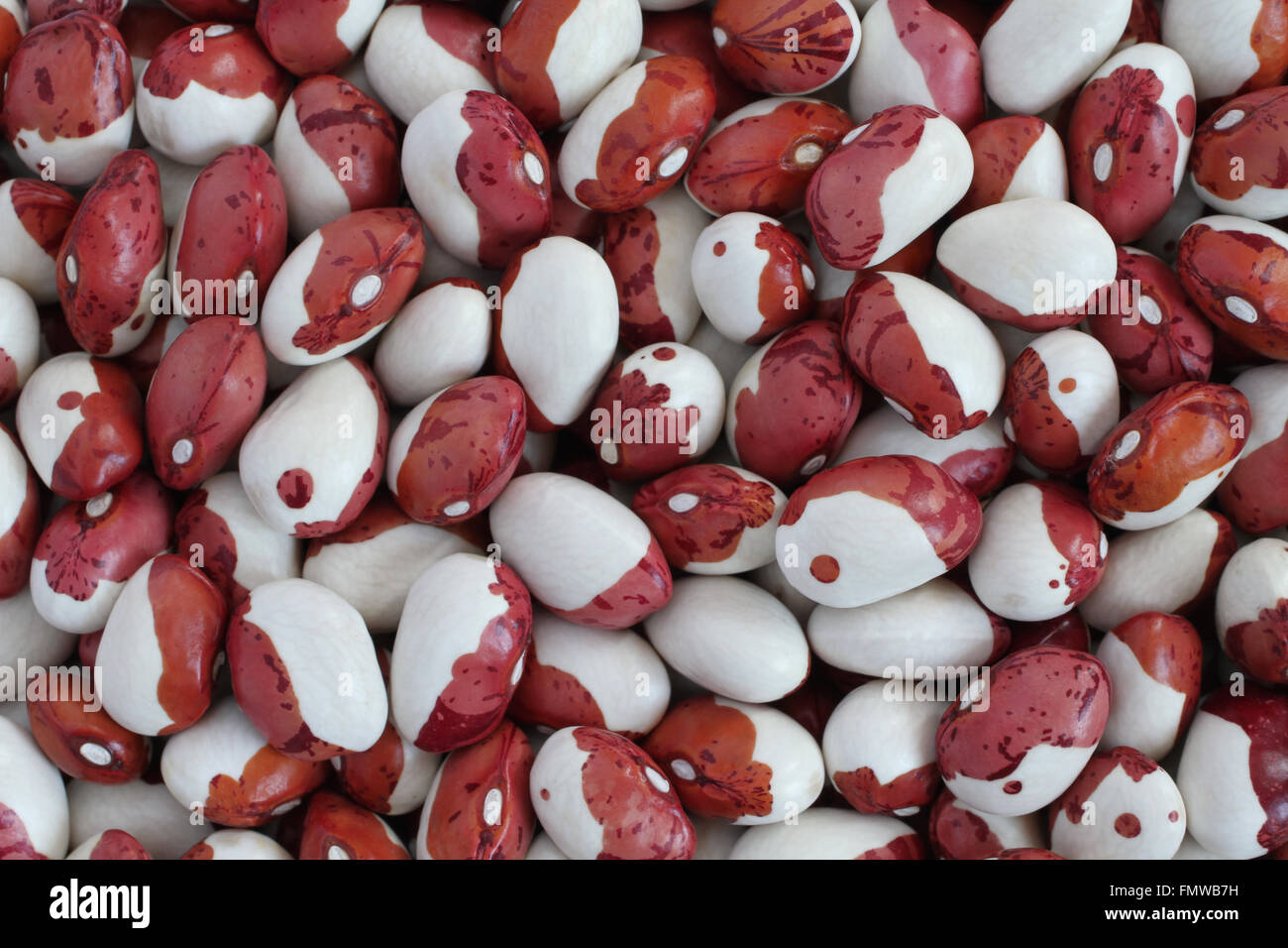 speckled red white beans stockfotos speckled red white beans bilder alamy. Black Bedroom Furniture Sets. Home Design Ideas