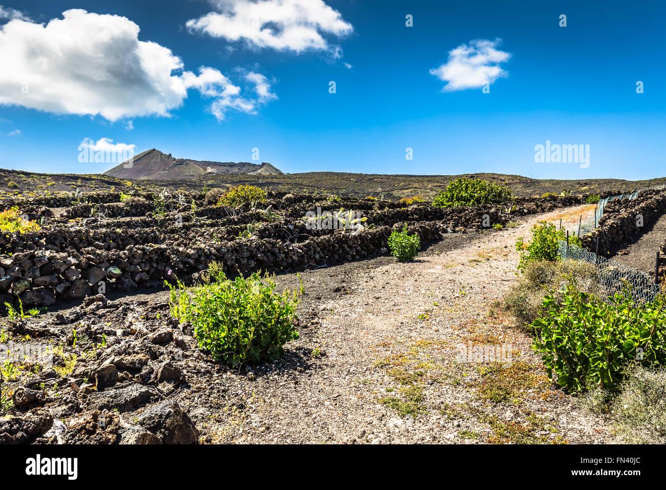 Feld im ländlichen Bereich mit blauem Himmel in der Nähe von Haria Stockfoto