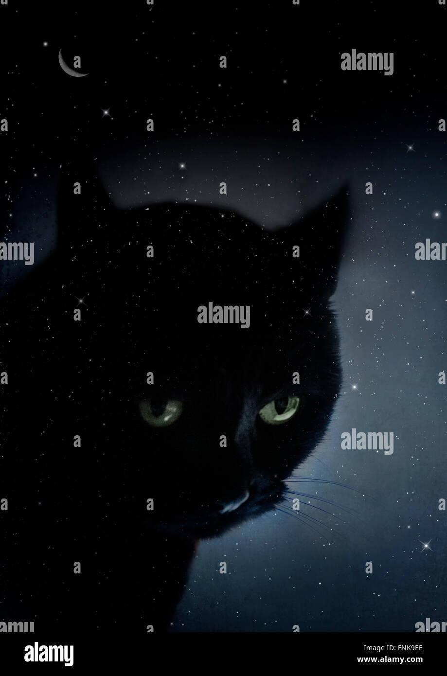 schwarze Katze in der sternenklaren Nacht Stockfoto