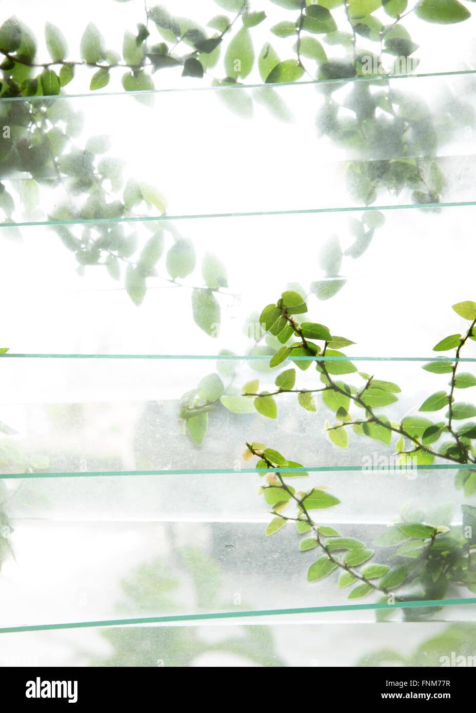 Das tropische Grün außerhalb ein Glasfenster in üppig feuchten Klima in Penang, Malaysia Stockbild