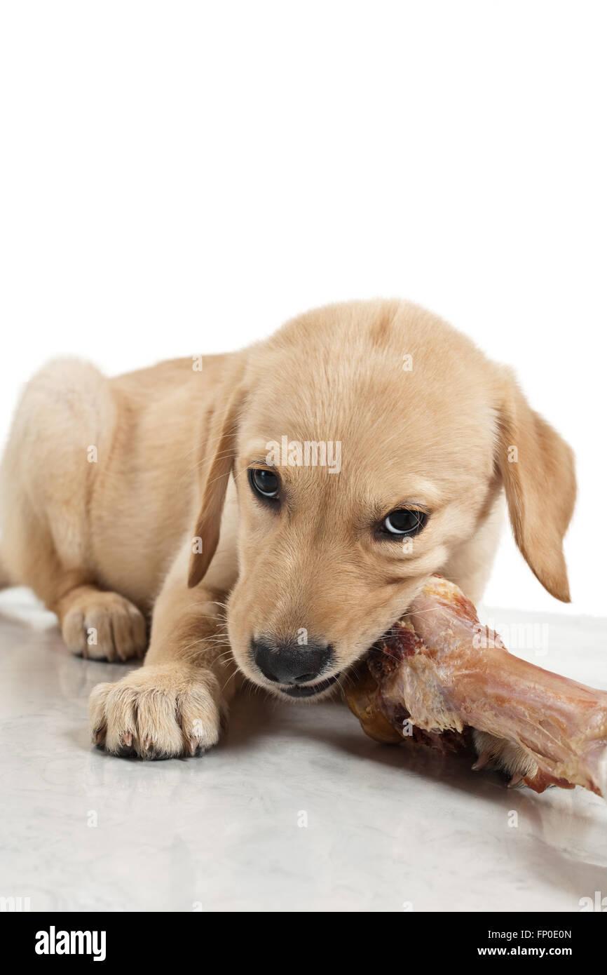 Bone For Dogs Stockfotos & Bone For Dogs Bilder - Seite 15 - Alamy