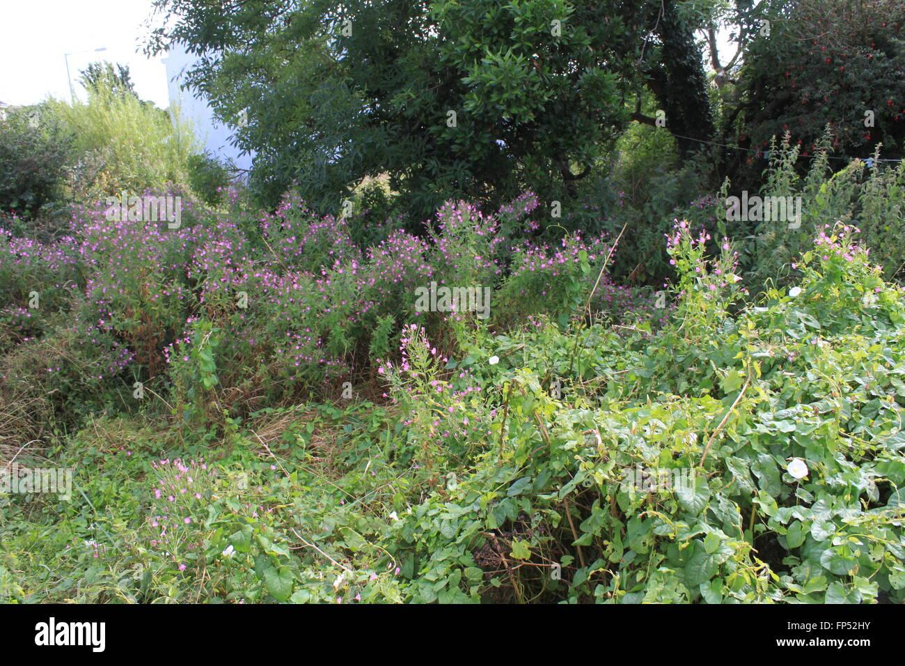 Grossen Verwilderten Garten Zuteilung Oder Brachland Stockfotografie Alamy