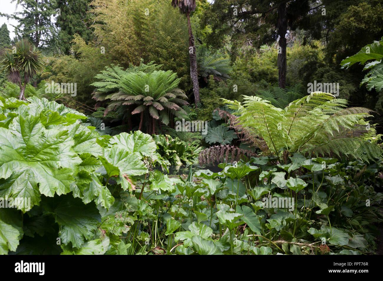 Dschungel in die Lost Gardens of Heligan in Cornwall Stockbild