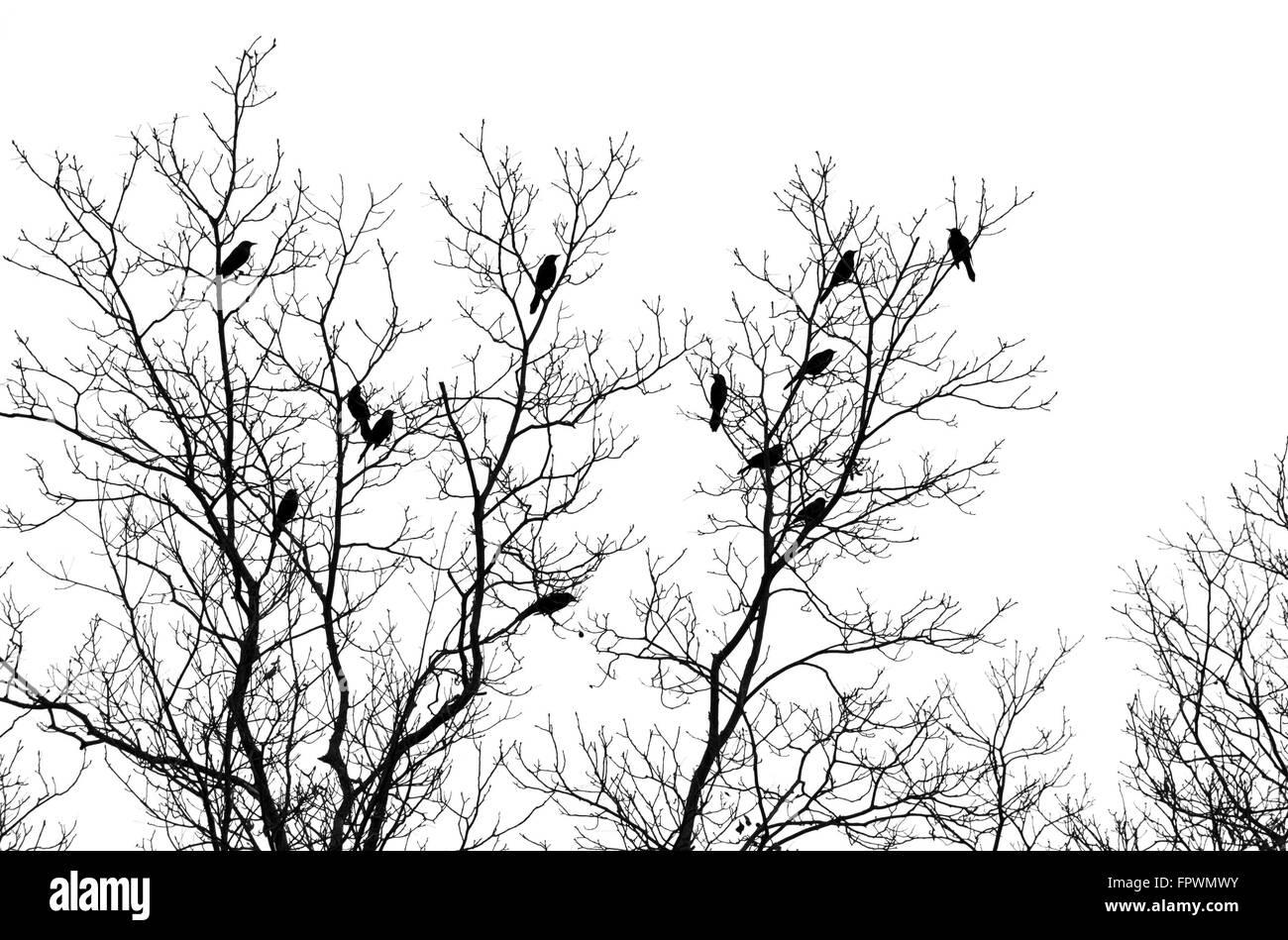 Vögel im Baum isoliert auf weißem Hintergrund Stockbild
