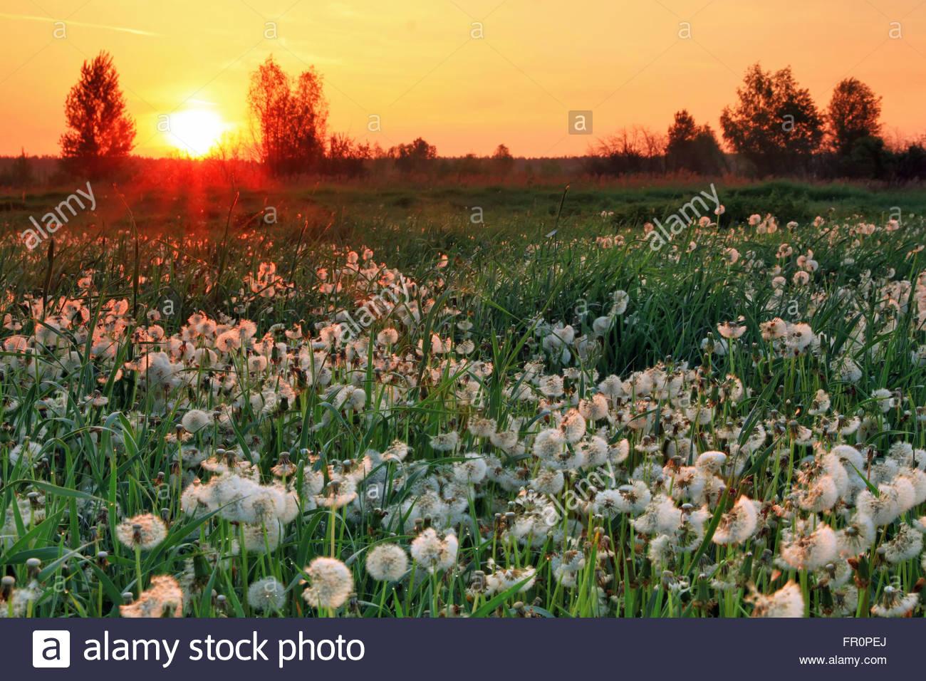 Sonnenaufgang auf dem Feld im Sommer Stockbild