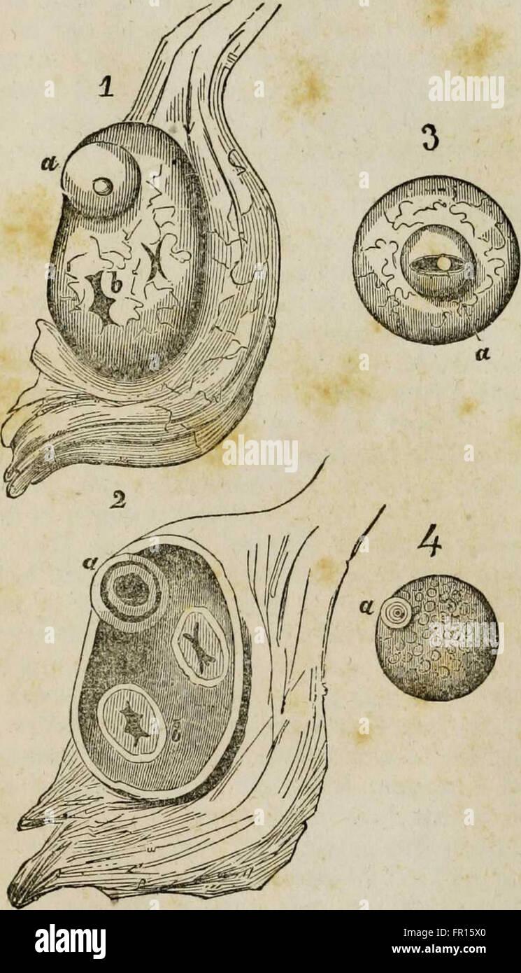 Ungewöhnlich Anatomie Und Physiologie Für Pflege Und ...
