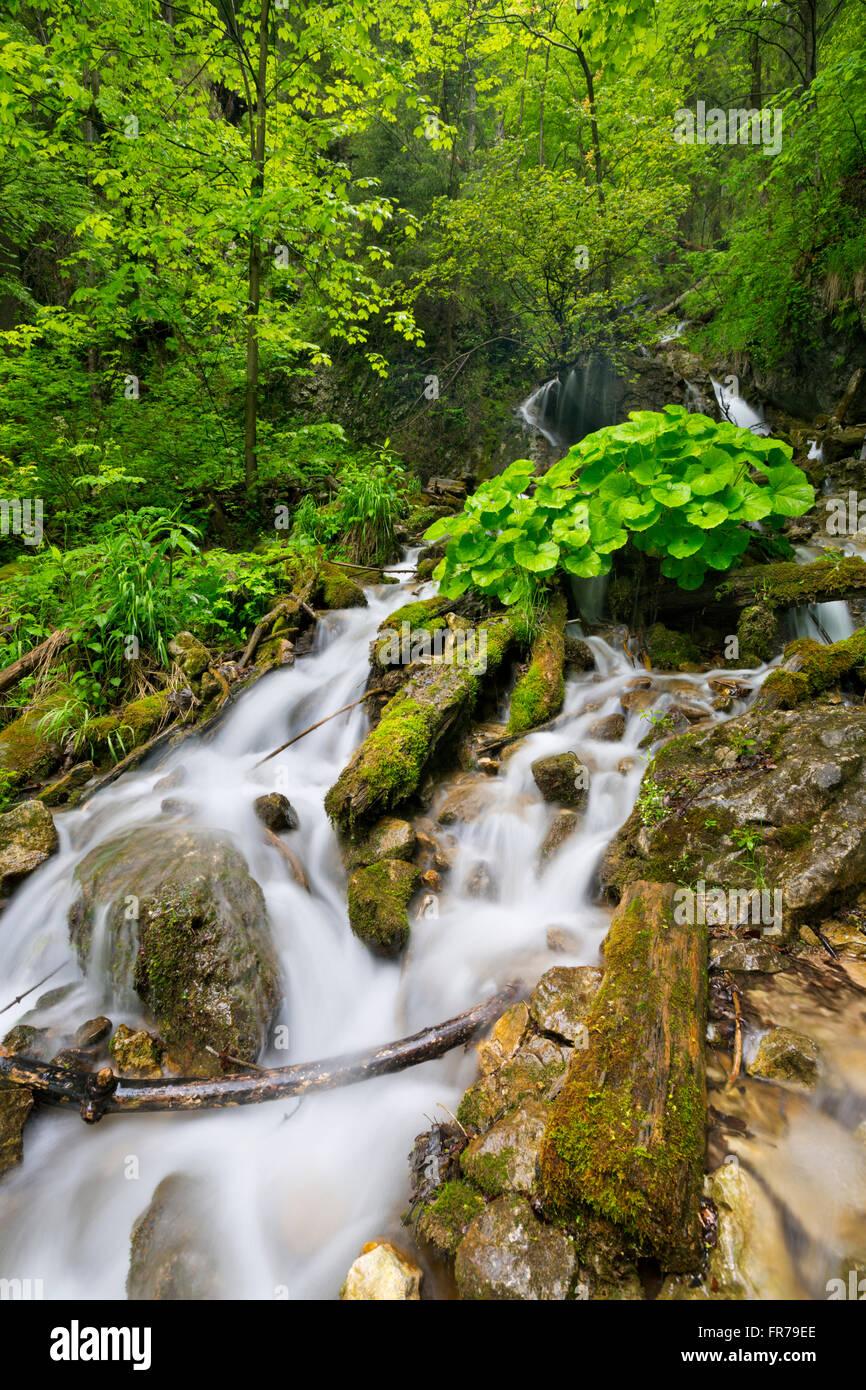 Ein Wasserfall in einer üppigen Schlucht in Slovenský Raj in der Slowakei. Stockbild