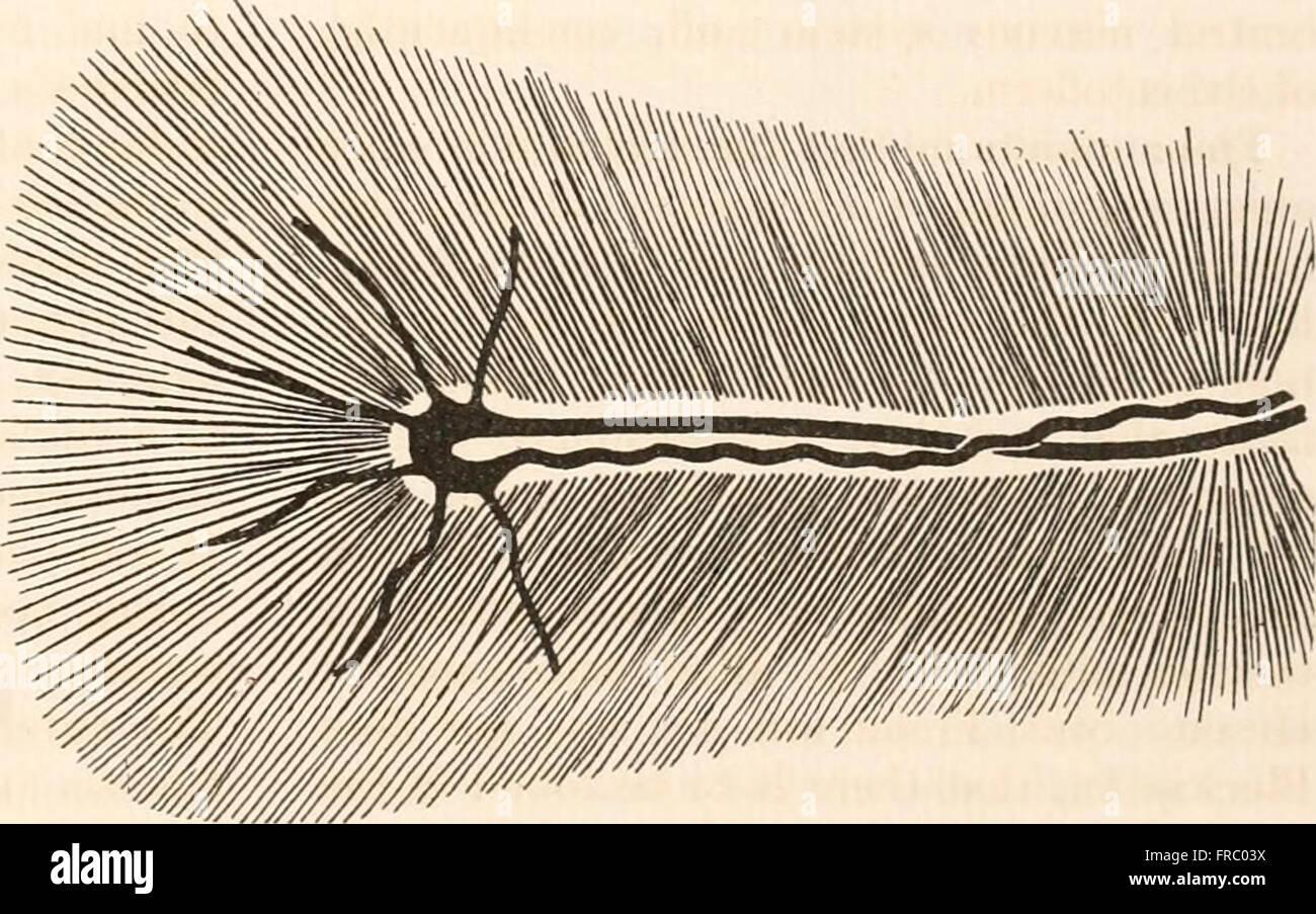 Der Fundus Oculi der Vögel, vor allem, da durch das Ophthalmoskop ...