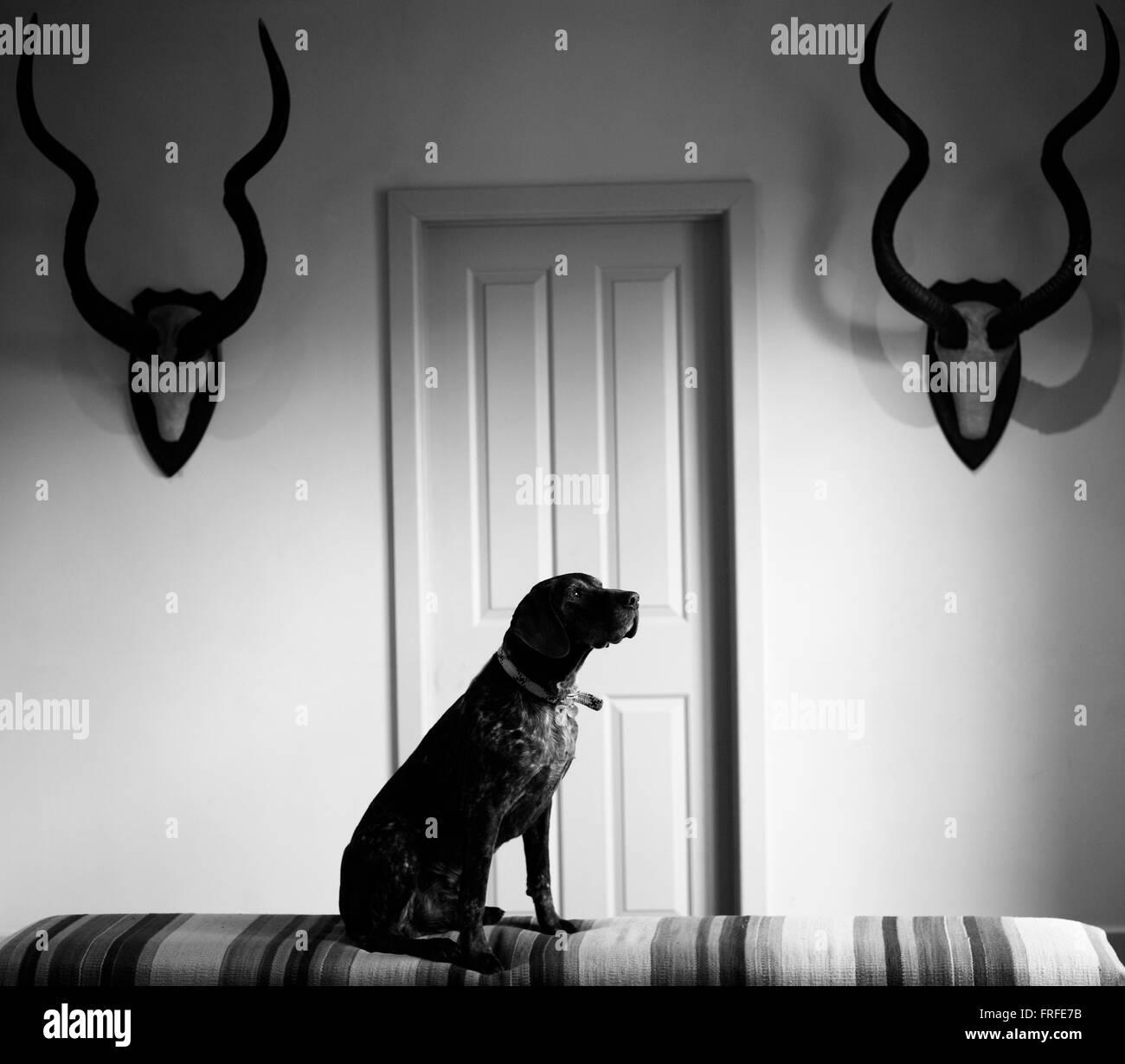Porträt eines Hundes Stockbild