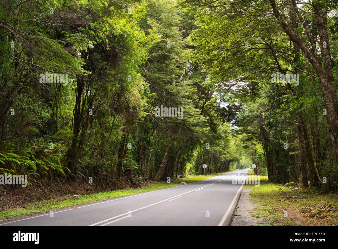 Straße bei Reserva Nacional LLanquihue, Chile Stockbild