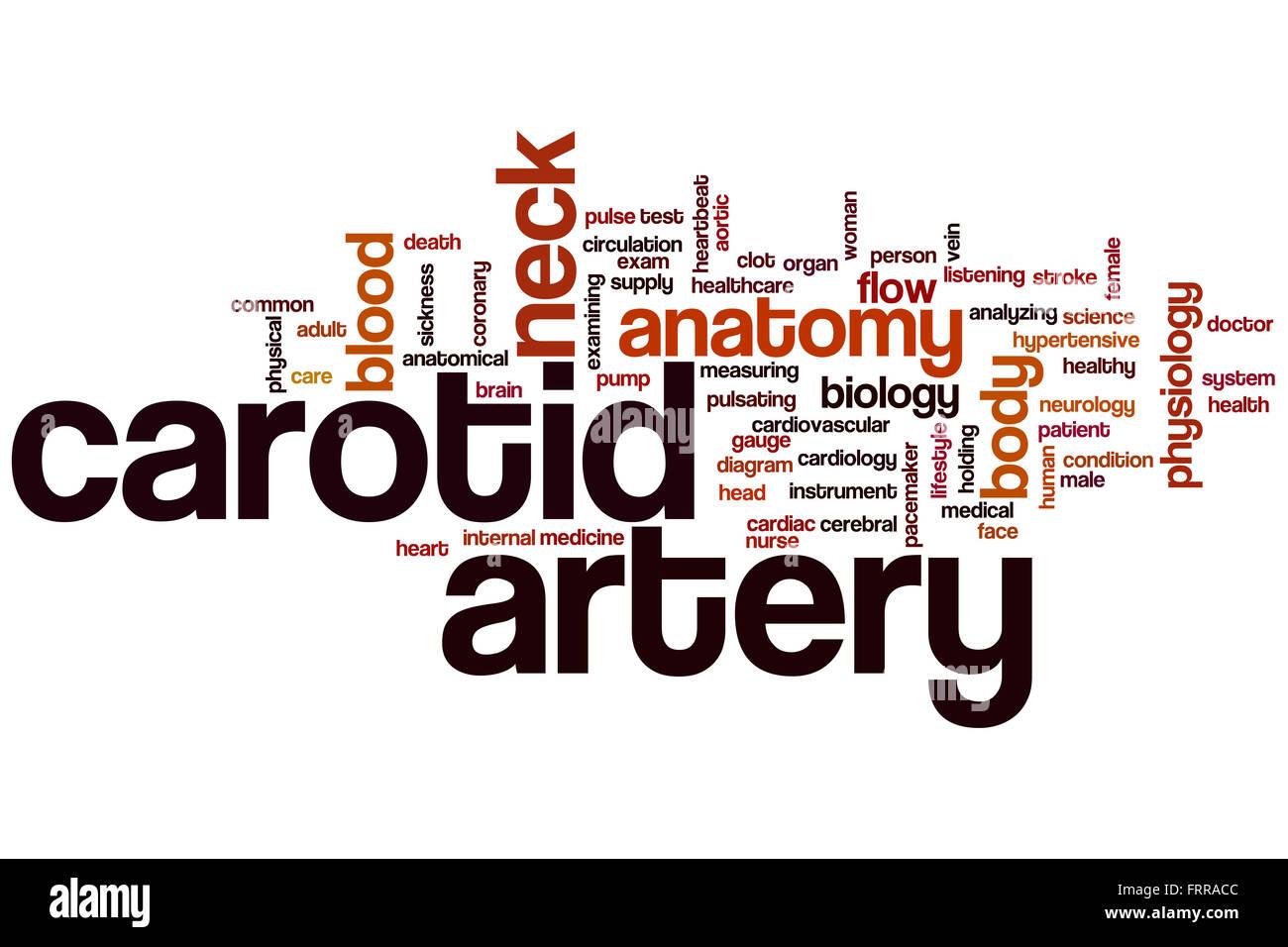 Carotid System Stockfotos & Carotid System Bilder - Alamy